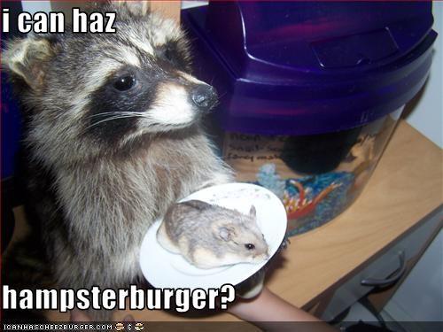 Cheezburger Image 2988785920