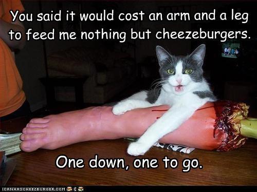 bad cat cheezburger murder - 2989531392