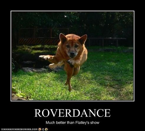 dance,jump,outside,poster,riverdance,shepherd mix