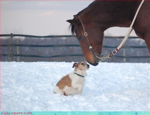 dogs horse snow - 2990238976