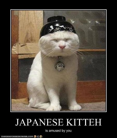 JAPANESE KITTEH is amused by you