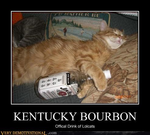 bourbon booze jim beam Cats