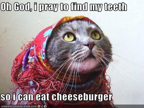 Cheezburger Image 2994106624