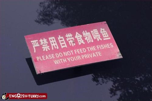 animals feed fish sign