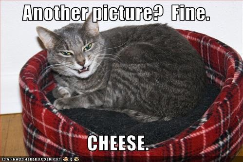 Cheezburger Image 2994510592