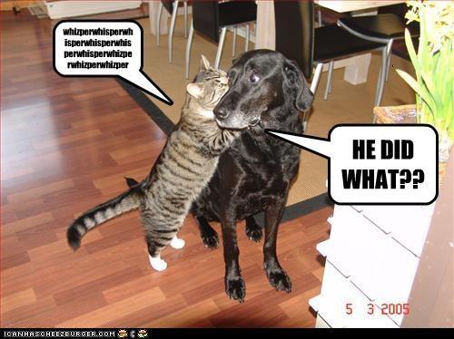 gossip whisper lolcats tears labrador - 2994912512