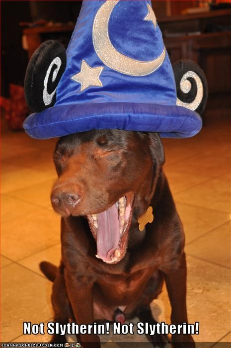 Harry Potter,hat,mickey mouse,pit bull,sorting,wizard