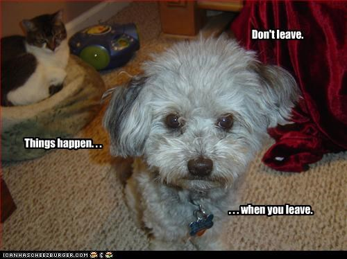 dont havanese leave lolcats please scared - 2995704576