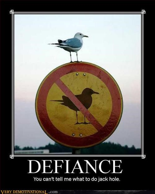 bad ass,bird,defiance,Pure Awesome,sign