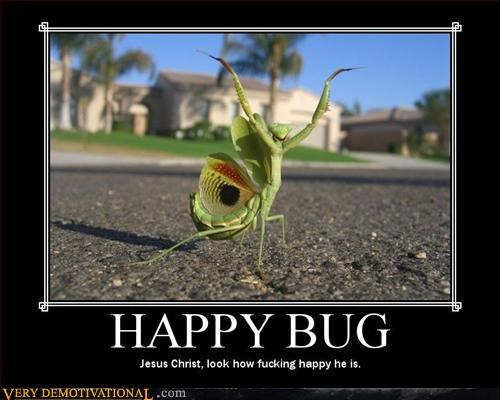 awesome bug happy mantis Pure Awesome