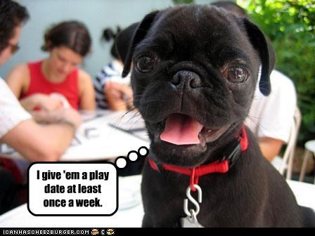 date human play pug puppy - 2997074432