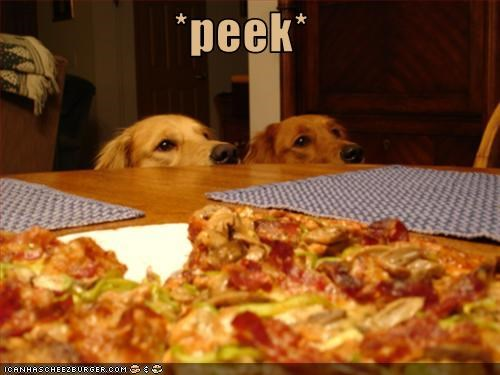 food,golden retriever,peek,pizza
