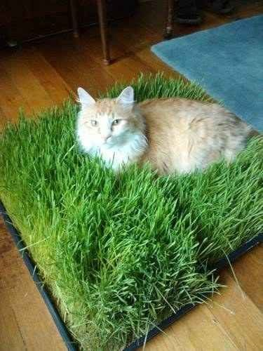 a photo of a cat lying on a piece of grass that has been cut out and brought inside for it to lay on - cover for a list of hacks for any pet owner