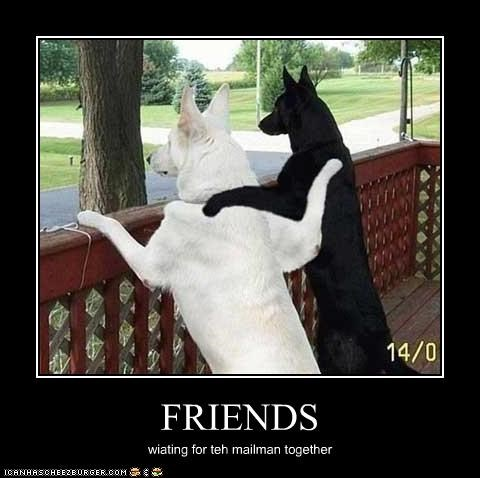 friends friendship german shepherd hugging mailman waiting - 2998658048