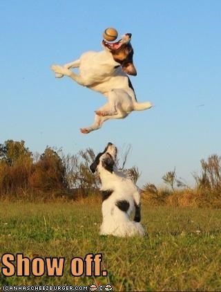 flying jack russel terrier jumping leap show off - 2999042816