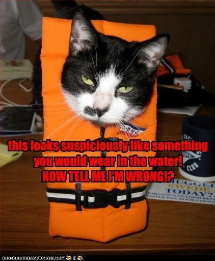 Cheezburger Image 2999297792