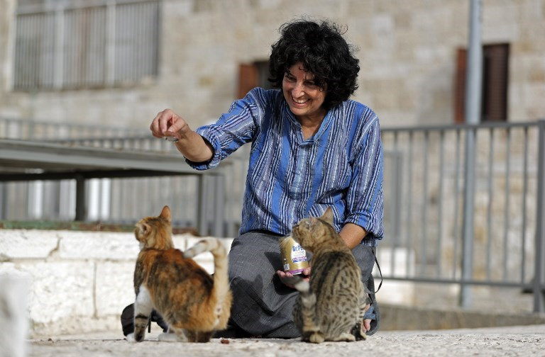 a photo of a lady feeding two stray cats - cover for a story about a jerusalem jew going around the old city and rescuing cats