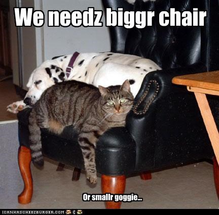Cleverness Here We needz biggr chair Or smallr goggie...