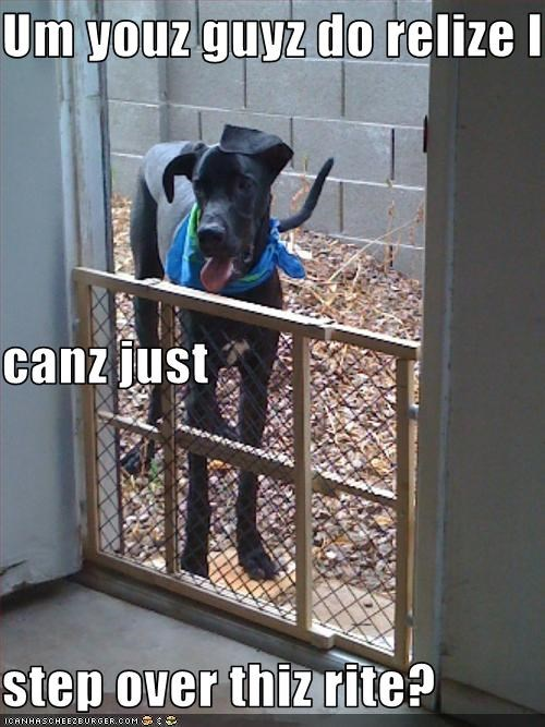 gate,great dane,steps,tall