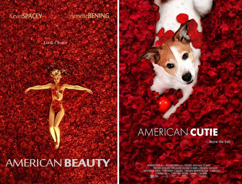 a movie photo of the original american beauty poster on the left and a recreation of the posting using a dog instead - cover for a list of redone movie posters with a dog instead of humans