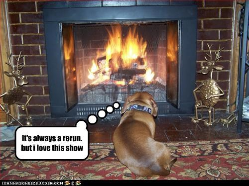comfy fireplace sitting watching whatbreed - 2999912448