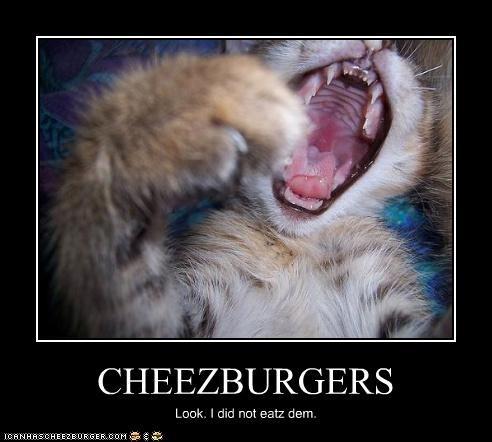 Cheezburger Image 2999926784