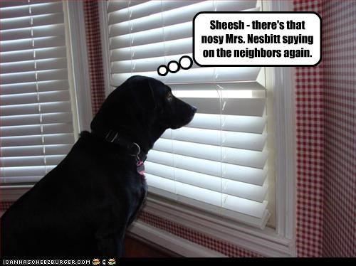labrador nosy peek spy windows - 3000170240