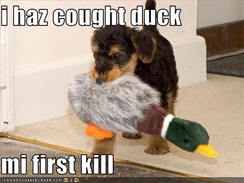 airdale,caught,duck,hunt,hunting,kill,puppy
