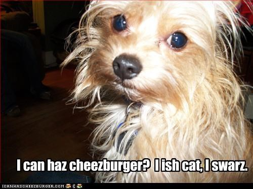 Cheezburger Image 3002778880