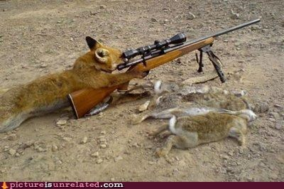 fox,is-this-cute,sniper,wtf
