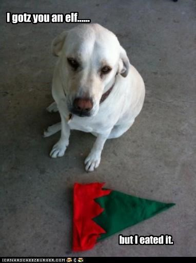 accident christmas eated elf Hall of Fame labrador merry christmas present Sad sorry