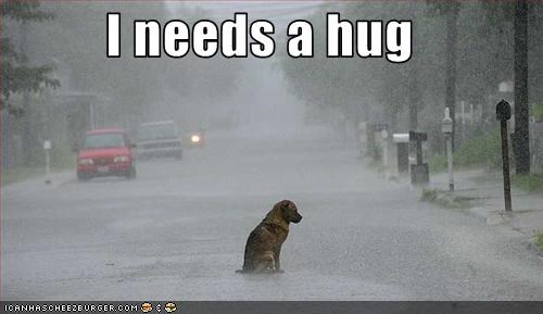 german shepherd,Hall of Fame,hug,lonely,need,raining,Sad,unhappy