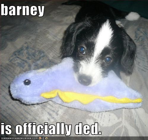 barney,border collie,dead,dinosaur,noms,officially,puppy,stuffed animal