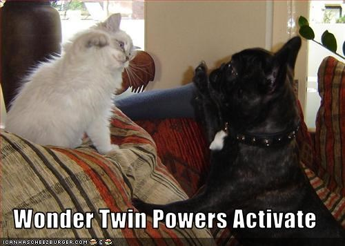 cat,french bulldogs,friends,friendship,high five,wonder twins