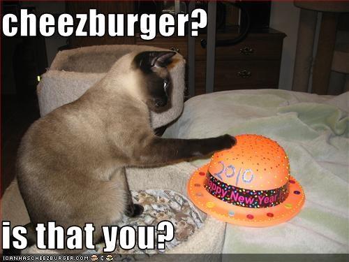 Cheezburger Image 3004040448
