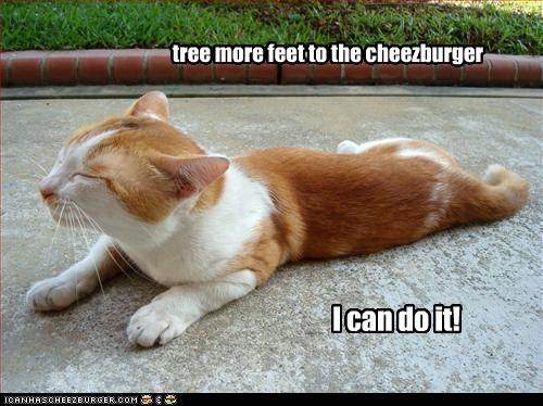 Cheezburger Image 3005956352