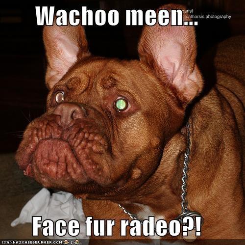 bulldog ugly - 300601088