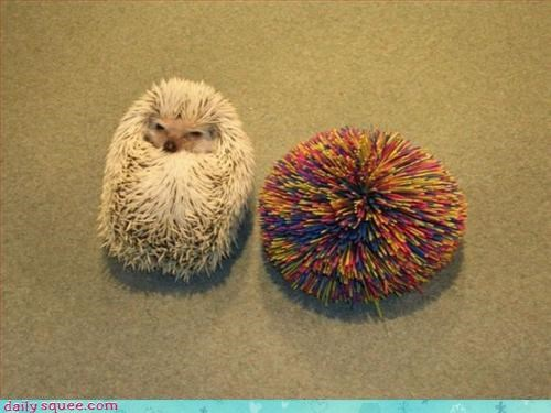 blender,hedghog,kooshball
