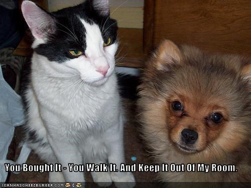 keep out,lolcats,mine,pomeranian,room,walk