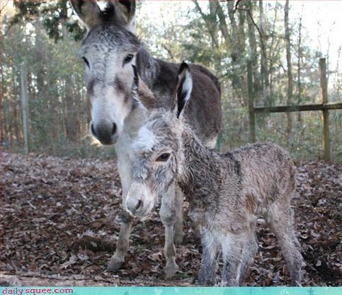 baby,donkey,puns