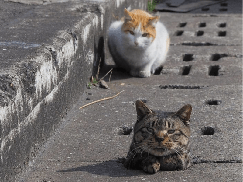 Japanese stray cats create cool street playground