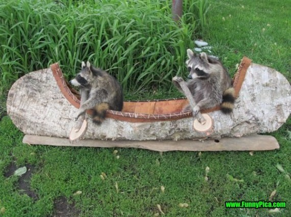 photos of funny trash pandas