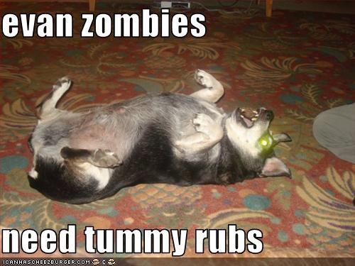 eyes laser rubs tummy whatbreed zombie apocalypse - 3011911680