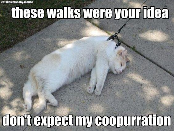 a photo of a cat not willing to take a walk with his owner - cover for a list of lazy cats