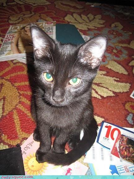 cat economy kitteh - 3014073088