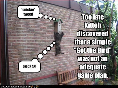 """Too late Kitteh discovered that a simple """"Get the Bird"""" was not an adequate game plan. *snicker* tweet! OH CRAP!"""