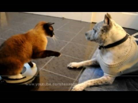 Funny and cute dog and cat GIFs.