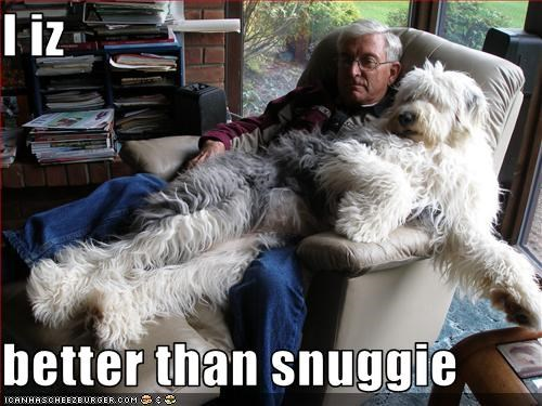 cuddling english sheepdog human snuggle