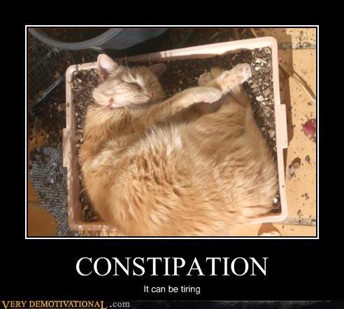 cat tired sleep - 3016590336