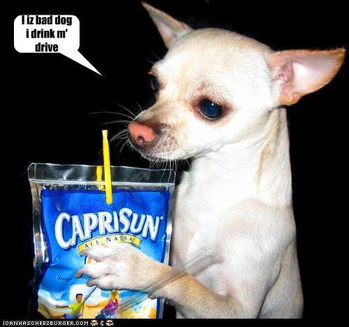 I iz bad dog i drink m' drive